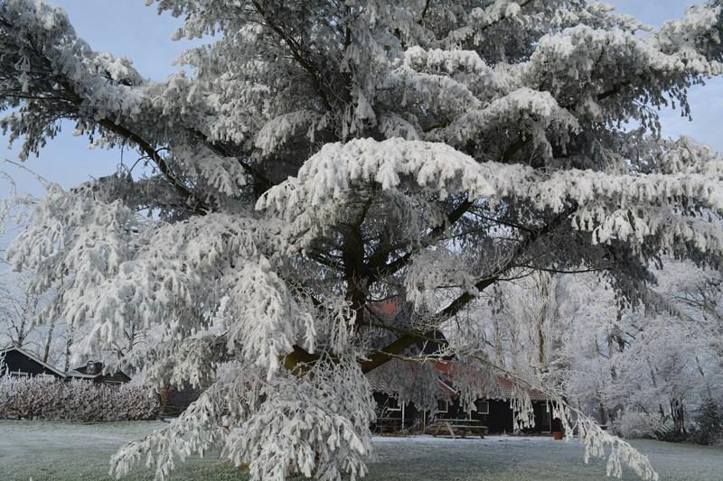 winter kristal getekend